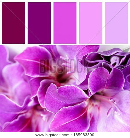 Lilac color matching and beautiful flowers, closeup