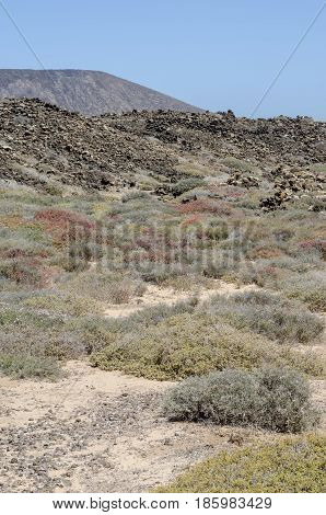 Flora Of Lobos Island In Canary Islands, Spain