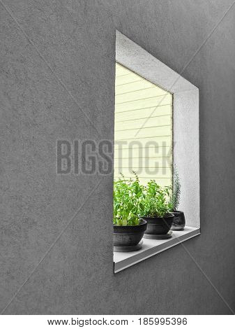 Potted herbs on a window sill. Detail of an urban residential building.