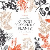 Vector frame design with hand drawn poisonous plants illustration. Vintage noxious plants sketch background. Botanical template with poisonous flowers isolated on white. poster