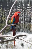 Red parrot perched in front of a waterfall poster