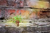 Persistence, determination ,survival ,hope, resilience strength ,winning force of nature. The green plant sprouted through the stones. poster