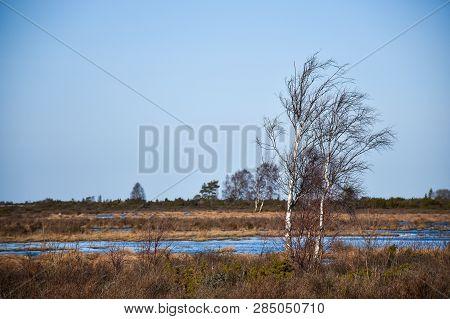 Beautiful Wetland Landscape By Early Spring Season At The Swedish Island Oland