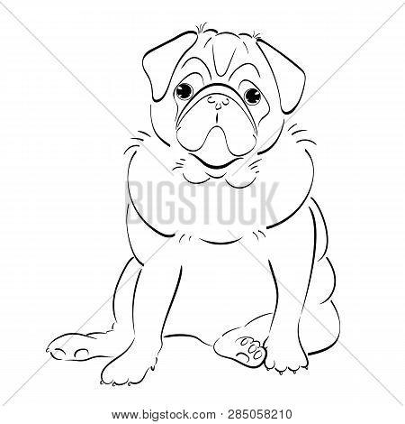 Hand Drawn Line Art Pug Dog, Isolated On White Background
