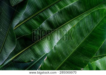 Close Up A Skin Pattern Of Tropical Waterplant Leaves With Dark Light Background