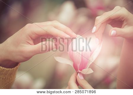 Man And Woman Holding Flower. Walk In Botanical Garden. Magnolia In Woman Hand. Tender Spring Feelin