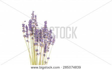 Bouquet Of Violet Lilac Purple Lavender Flowers Arranged On White Table Background. Top View, Flat L