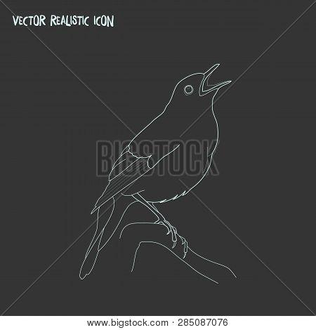Nightingale Icon Line Element.  Illustration Of Nightingale Icon Line Isolated On Clean Background F