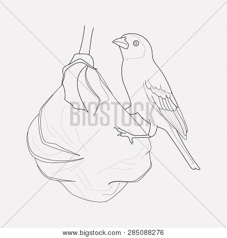 Weaver Bird Icon Line Element. Vector Illustration Of Weaver Bird Icon Line Isolated On Clean Backgr