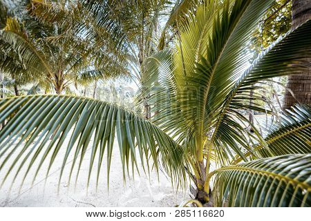Bright Tropical Background And Texture Palm Tree Closeup, Holidays In Warm Countries