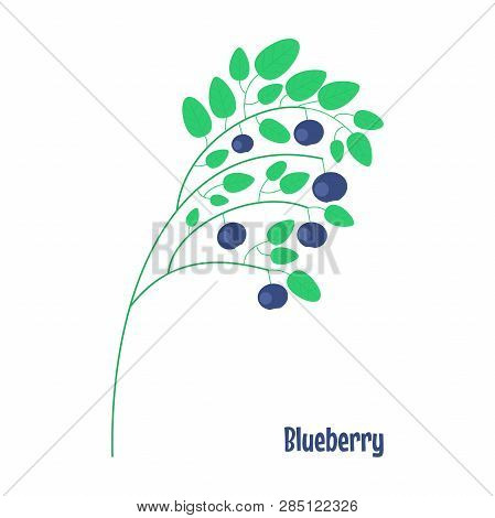 Blueberry. Isolated Wild Berries On White Background. Vector Illustration.