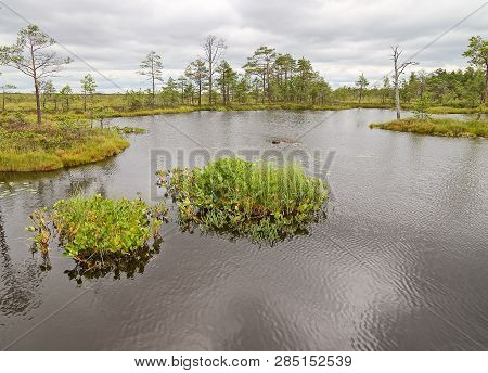 Rannametsa Tolkuse Nature Study Trail. Scenic Swamp View With A Small Pond And Wetland. Estonia.