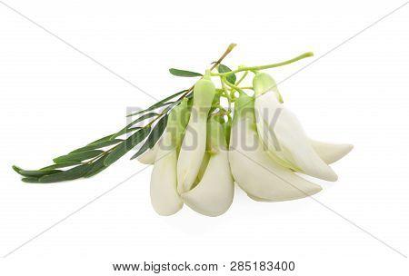 Flowers And Leaves Vegetable Humming Bird Sesban Agasta
