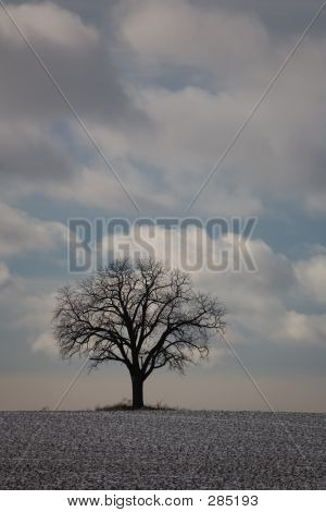 Nature Winter Tree 01