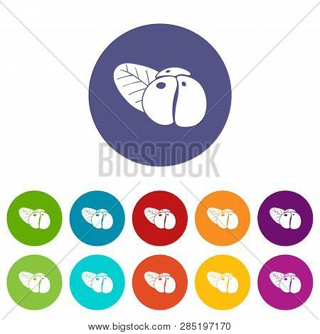 Ephedra Icons Color Set Vector For Any Web Design On White Background