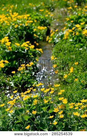 A Small Stream Of Water Flowing Through A Field Of Buttercups In The Austrian Alps