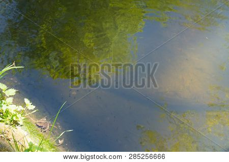 Tadpoles Family And Green Nature Background In The Water
