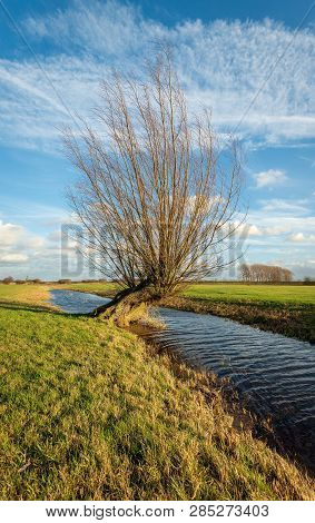Skew Growing Bare Pollard Willow Tree In A Dutch Polder Landscape. The Photo Was Taken In The Zonzee