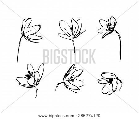 Set Of Hand Drawn Wildflowers. Outline Flower Plant Silhouette Brush Ink Painting. Black Isolated Ve