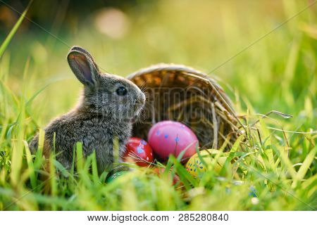 Easter Bunny And Easter Eggs On Green Grass Outdoor / Colorful Eggs In The Nest Basket And Little Ra
