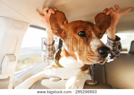 Image of young woman playing around with her brown pedigree puppy while riding in car