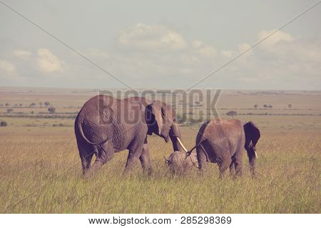 African elephant (Loxodonta africana) cow with young calf in wilderness bush, Kenya