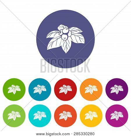 Whortleberries Icons Color Set Vector For Any Web Design On White Background