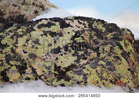 Rock Surface With Lichen And Moss Texture. Natural Moss On Stones. Background Texture In Nature. Sno