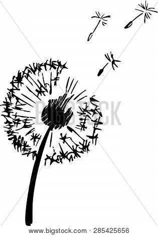 Dandelion Plant Silhouette. Contour Suitable For Cutting Vinyl Sticker. Vector Ink Illustration