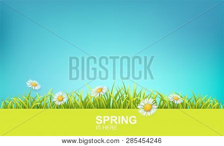 Spring Bright Background