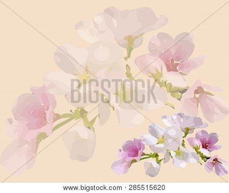 Blooming Cherry, Background With Flowers, Flower With Bud, Beautiful Flowers, Vector Flowers, Pink B