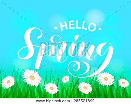 Summer Chamomile Green Glade. Hello Spring Lettering. Vector Illustration