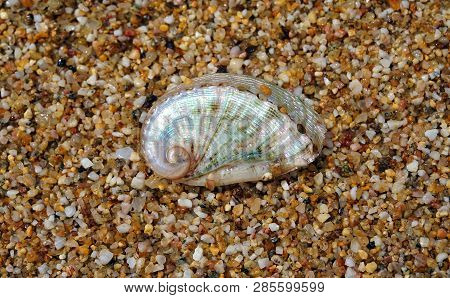 Beautiful Shell Photographed On The Sand At Lia Beach In Mykonos, Greece