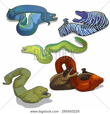 Set Of Colorful Moray Eels Isolated On White Background. Vector Cartoon Close-up Illustration.