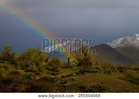 A Rainbow Passes Through A Saguaro Cactus In The Late Afternoon On A Cold, Stormy Day In Fountain Hi