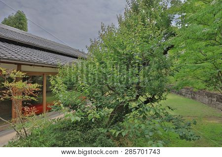 Traditional Japanese Room And Walkway At Garden