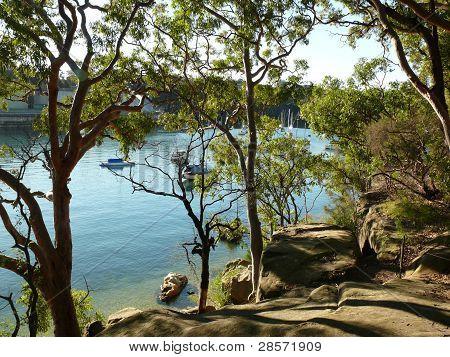 Eucalyptus trees growing on rocks along the harbourside