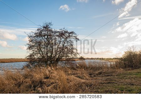 Silhouette Of A Bare Tree On The Bank Of A Meandering Creek At The End Of A Sunny Day In The Dutch W