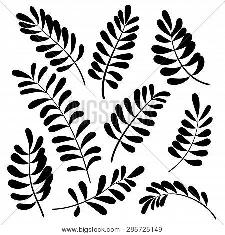 Different Leaves, Set Of Black And White Pictograms - Elements For Design. Vector