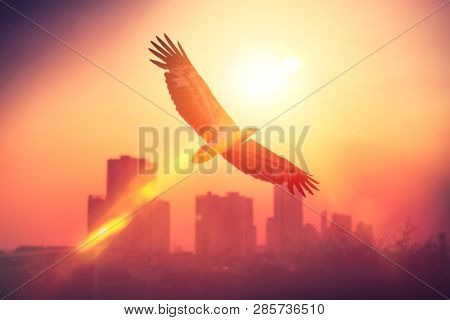 Eagle Bird Fly Over City On Sunset Sky Background. Freedom Concept. Vintage Tone Filter Effect Color