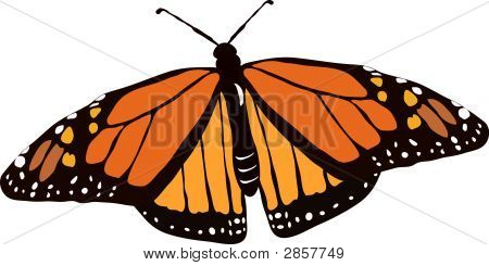 Monarch Butterfly In Flight
