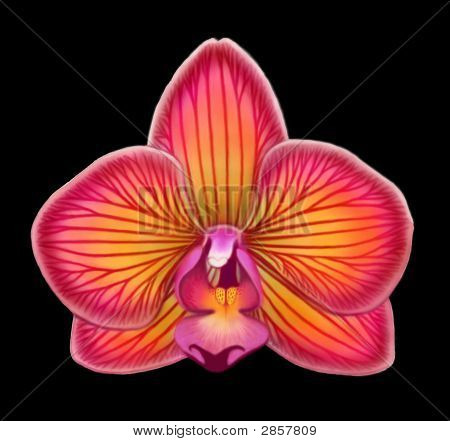 Phal Red No Sig Smaller
