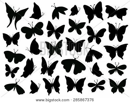 Papillon Silhouette. Mariposa Butterfly Wing, Moth Wings Silhouettes And Spring Flower Butterflies I