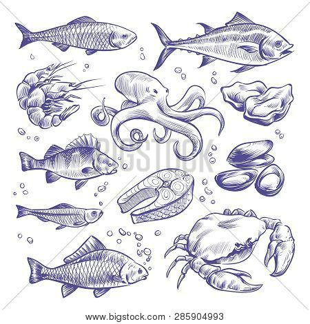 Seafoods Hand Drawn. Sea Fishes Oysters Mussels Lobster Squid Octopus Crabs Prawns Salmon Shellfish