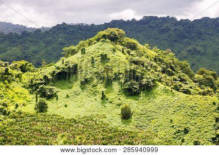 Beautiful Tropical Green Hill Overgrown With A Lush Tropical Emerald Rainforest Near Fijian Savusavu