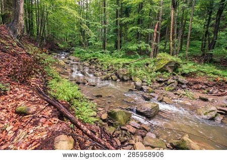 River In The Forest. Trees, Rocks And Fallen Foliage On The Riverbank. Freshness Of Beautiful Nature