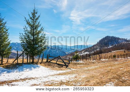 Sunny Springtime Weather In Mountain. Beautiful Carpathian Rural Countryside. Spruce Trees Near The