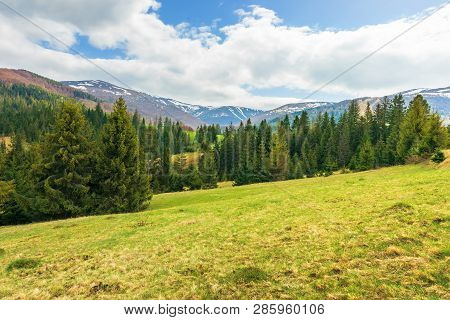 Springtime Landscape In Mountains. Coniferous Forest On The Grassy Slope. Distant Ridge With Spots O