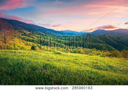 Mountainous Springtime Countryside At Sunset. Wonderful Landscape With Grassy Meadow And Forested Hi