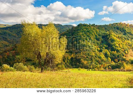 Tree On The Rural Field In Mountains. Beautiful Countryside Scenery In Early Autumn. Yellow Foliage.